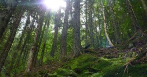 la foresta nera un paradiso per lescursionismo recovery energy Recovery Energy | Experience Emotions Canyoning Lazio, Abruzzo, Umbria. Escursionismo e Survival Blog