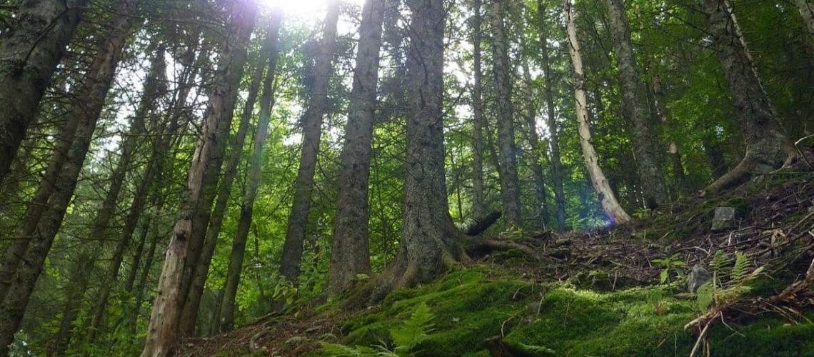 la-foresta-nera-un-paradiso-per-lescursionismo-recovery-energy